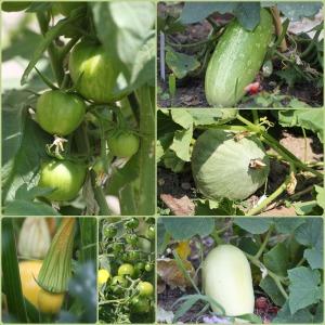 légumes2015